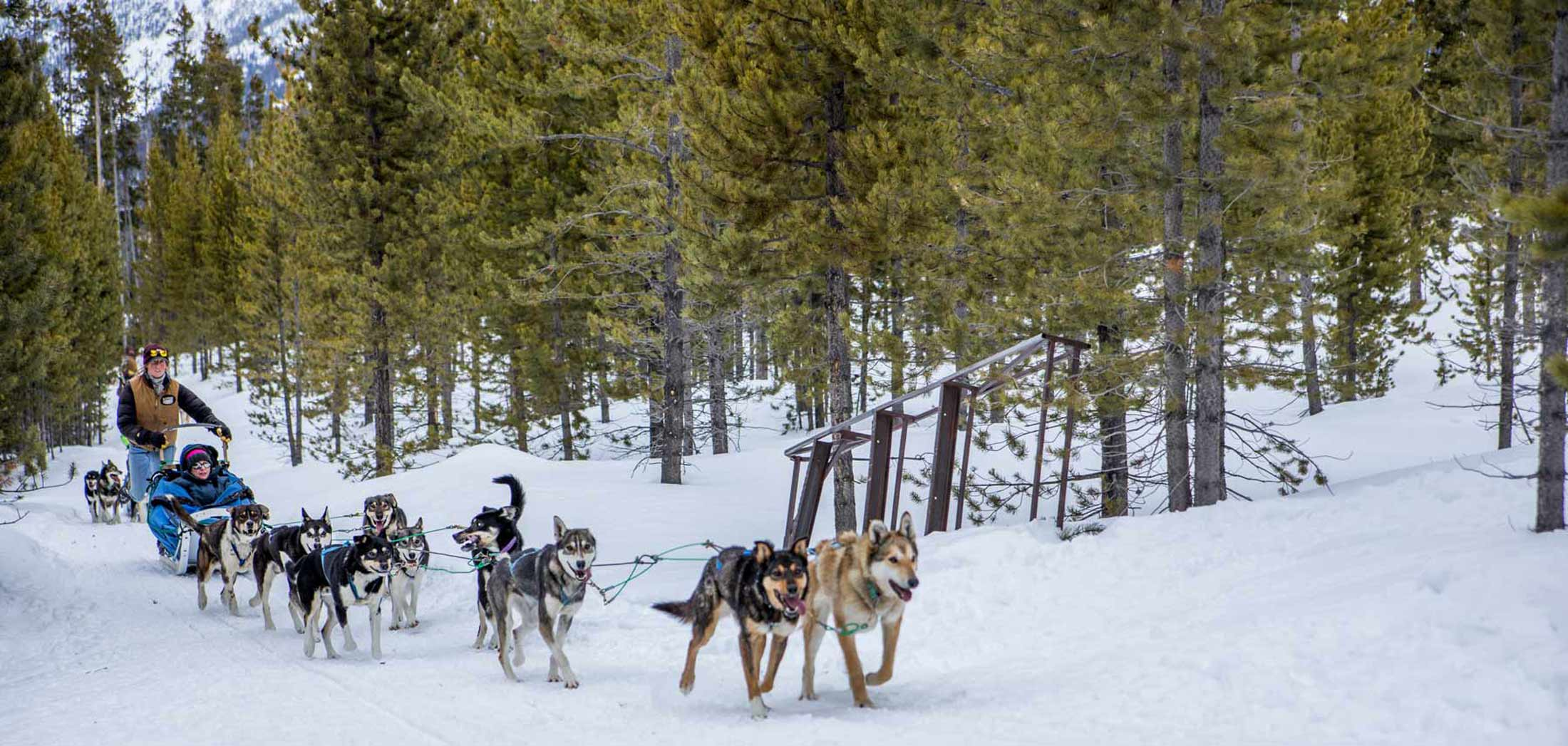 Winter Adventures in Glacier and Yellowstone Country